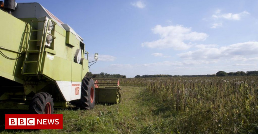 UK Hemp Farm Could Lose £200,000 In Crop Destruction